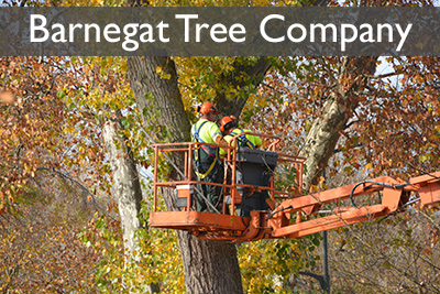 Barnegat Tree Company in white font in a grey box at the top of a picture of tree workers in an orange bucket truck extension.